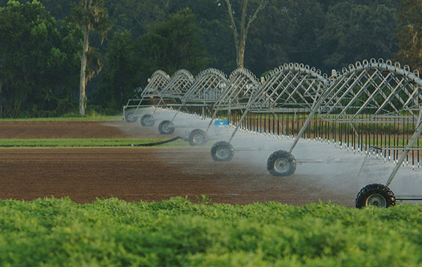 Pivot irrigation over a freshly dug field